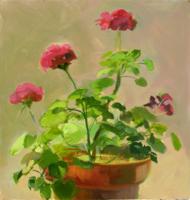 Geranium Pink   16x15   Oil on Canvas   2010